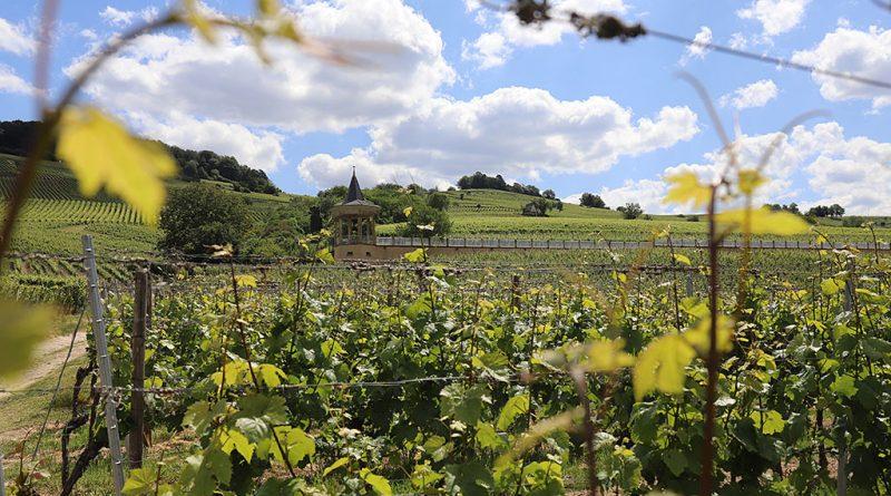 Bergstrasse Weinlagenwanderung